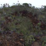 Shaft sur la mine Chimère 4 (Dumbéa nord)
